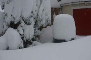 snow covered trash bin